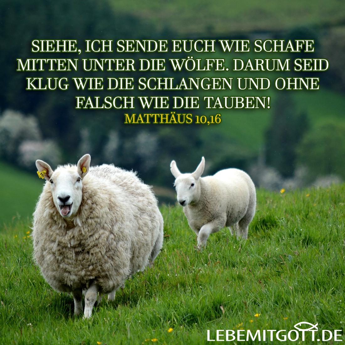 Schafe und Tauben