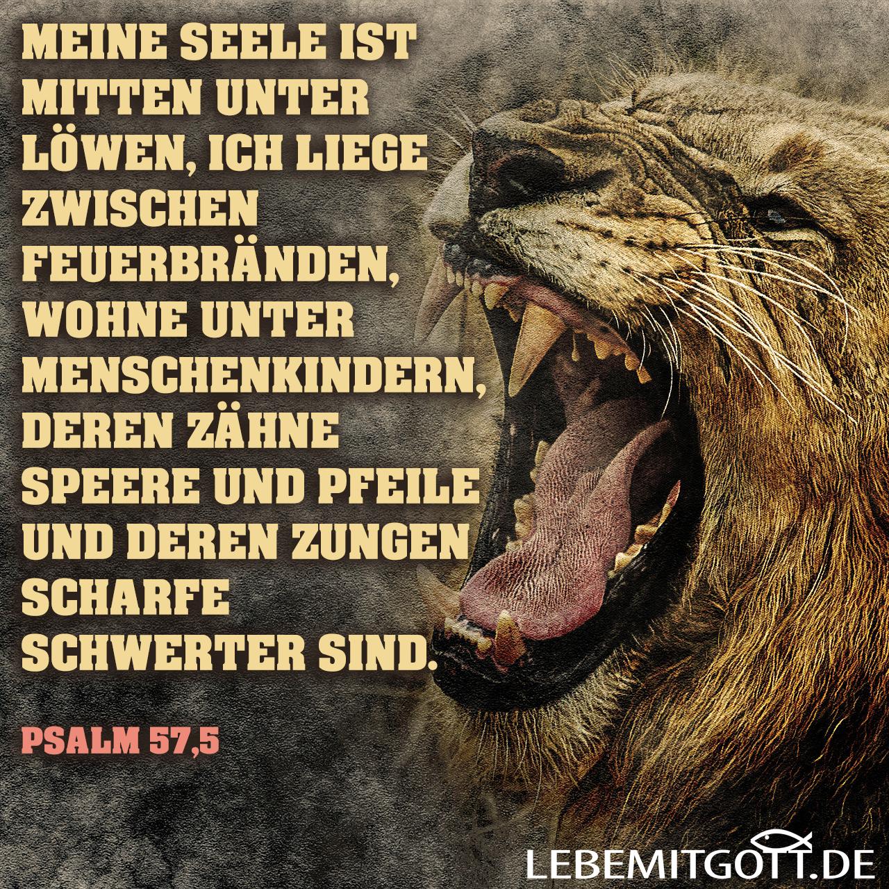 Mitten unter Löwen