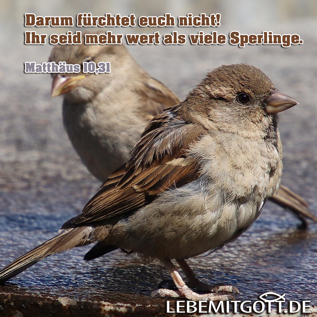 Sperlinge