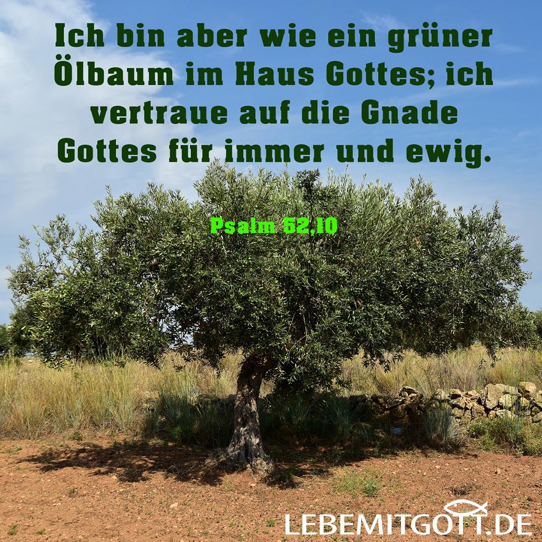 grüner Ölbaum