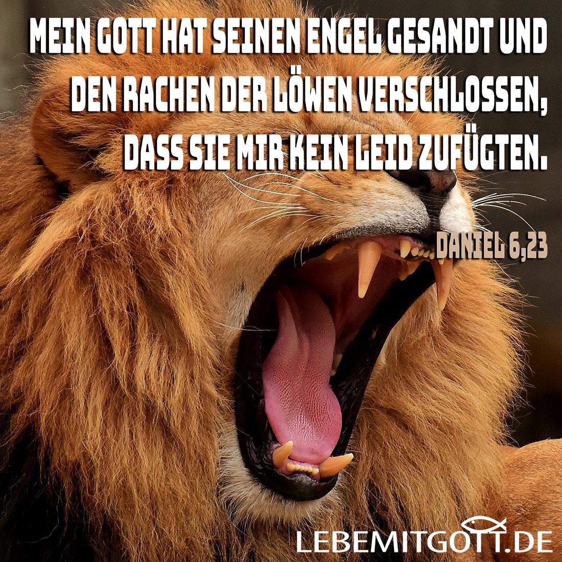 Rachen der Löwen